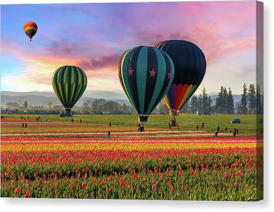 Hot Air Balloons At Sunrise Canvas Print by David Gn Photography