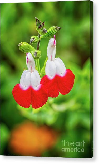 Canvas Print - Hot Lips Flower by Adrian Evans