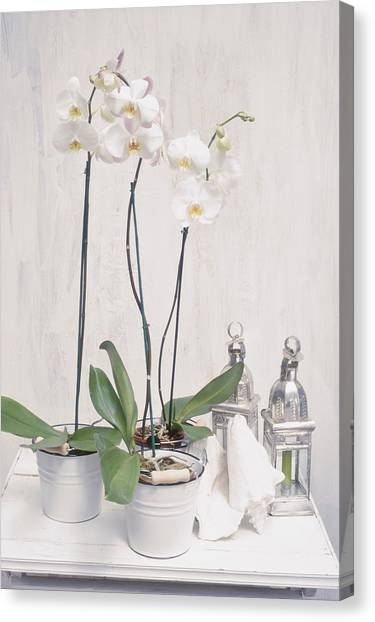 Houseplant Orchid - Phalaenopsis, 3 Canvas Print