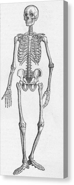Human Skeleton Canvas Print by Kean Collection