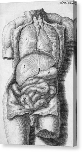 Indoors Canvas Print - Human Torso by Hulton Archive