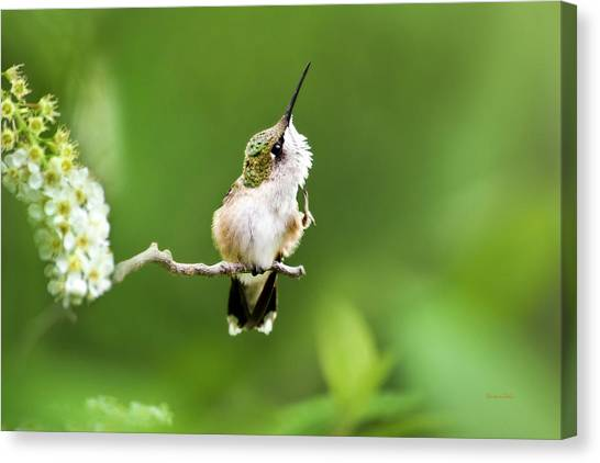 Hummingbird Flexibility Canvas Print