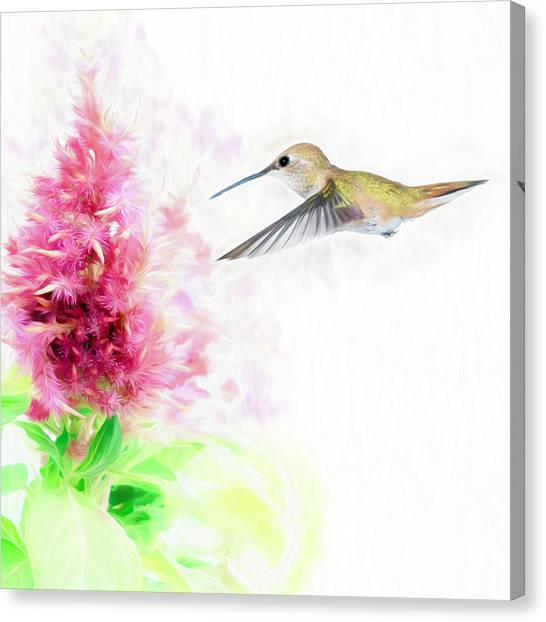 Hummingbird Pastels Canvas Print