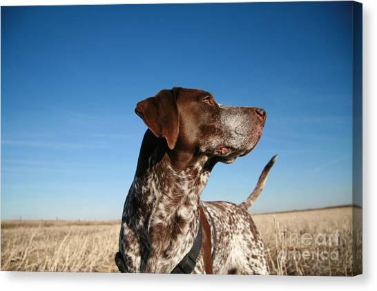Hunt Canvas Print - Hunting Dog by Jack Cronkhite