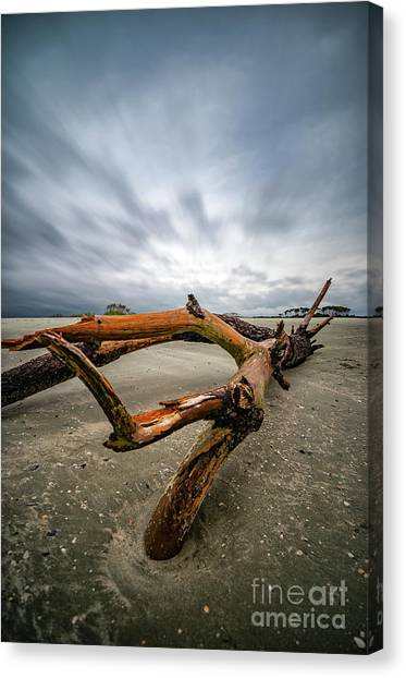 Hurricane Florence Beach Log - Portrait Canvas Print