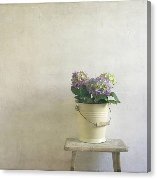Hydrangea Resting On Stool Canvas Print