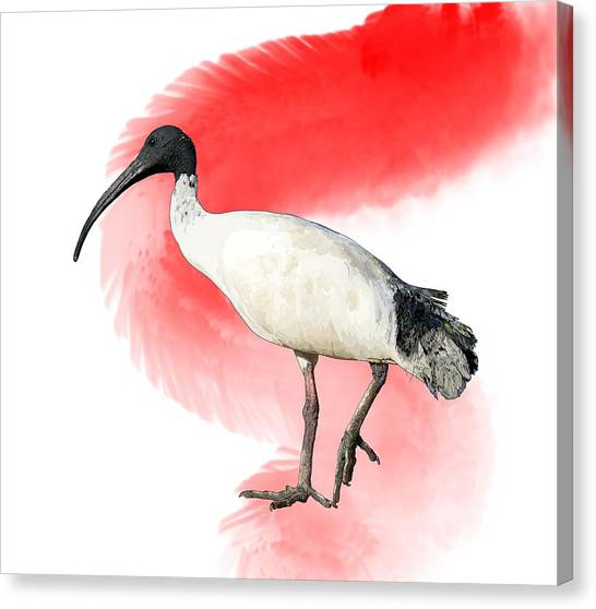 Canvas Print - I Is For Ibis by Joan Stratton