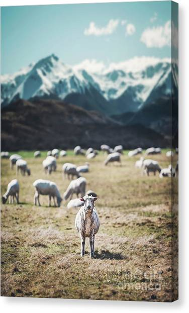 Ewe Canvas Print - I See Ewe by Evelina Kremsdorf