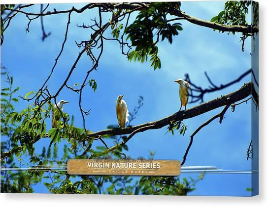 Ibis Perch - Virgin Nature Series Canvas Print