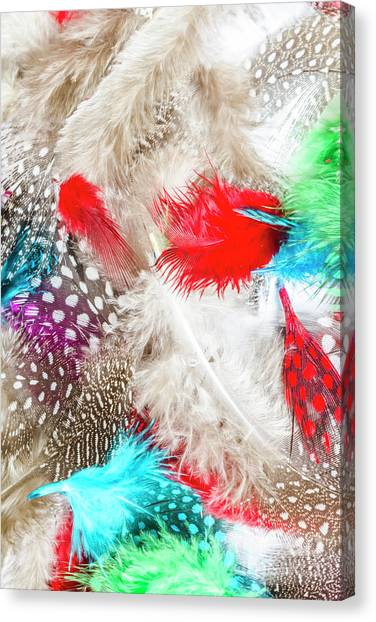 Avian Canvas Print - In Quill Colors by Jorgo Photography - Wall Art Gallery