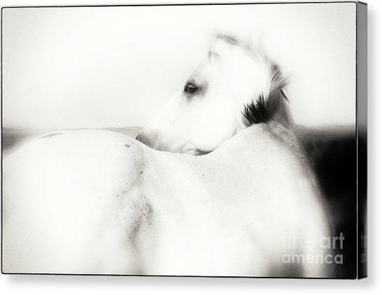 In The Quiet Of The World Canvas Print