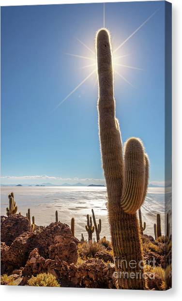 Andes Mountains Canvas Print - Incahuasi Island, Salar De Uyuni, Bolivia by Delphimages Photo Creations
