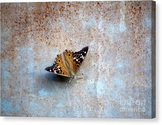 Industrious Butterfly Canvas Print