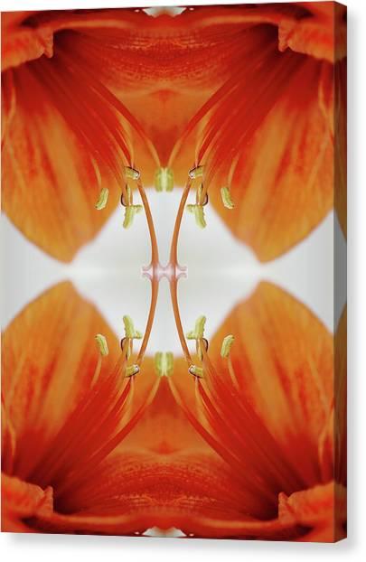 Inside An Amaryllis Flower Canvas Print