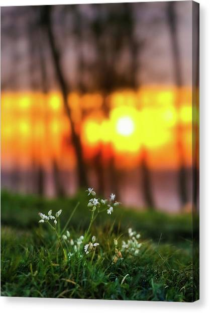 Canvas Print featuring the photograph Into Dreams by Davor Zerjav