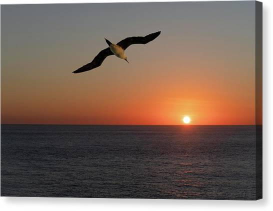 Canvas Print featuring the photograph Into The Setting Sun by William Dickman