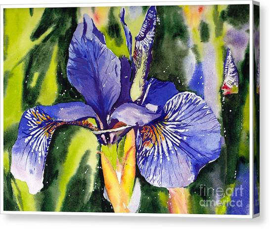 Quebec Canvas Print - Iris In Bloom by Suzann's Art