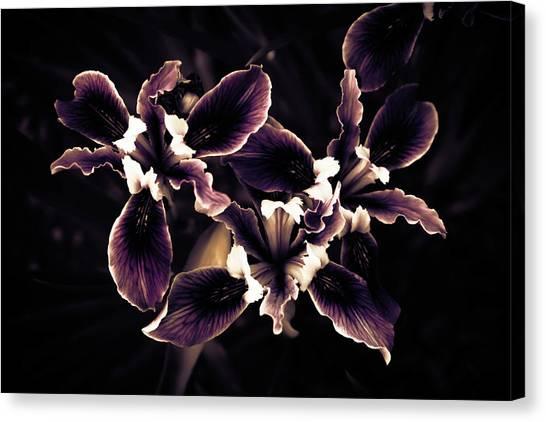 Irresistible Iris Canvas Print