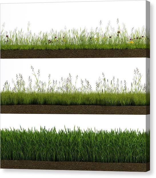 Isolated Grass Canvas Print by Ivanwupi