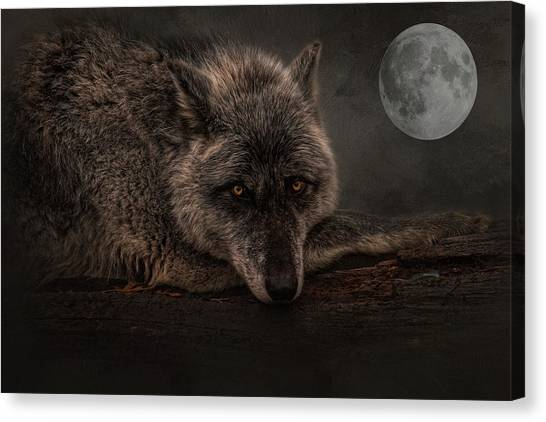 Its A Lonely Night  Canvas Print