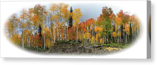 It's All About The Trees Canvas Print