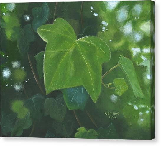 Ivy Waltz Canvas Print