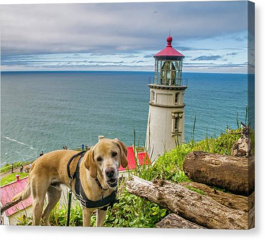 Jackson At Heceta Head Lighthouse Canvas Print