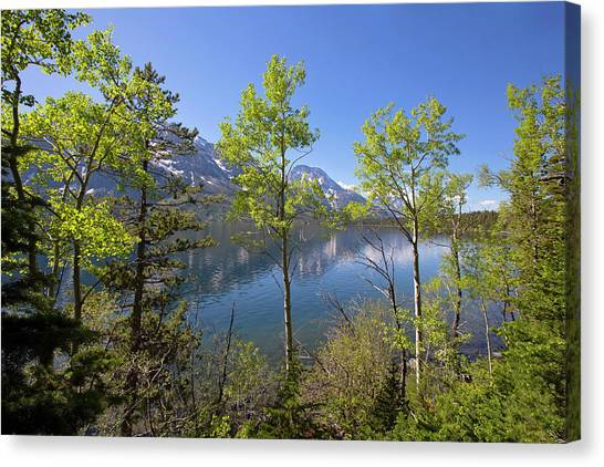 Canvas Print featuring the photograph Jackson Lake by Sue Collura