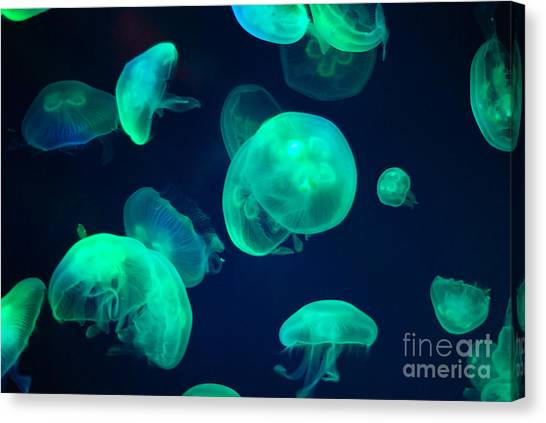 Sea Life Canvas Print - Jellyfish by Chizara3
