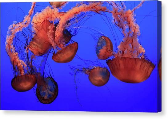 Jellyfish Canvas Print by Ionut Iordache