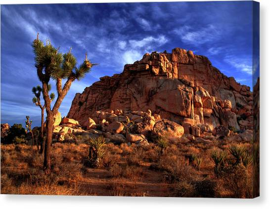 Joshua Tree And Rock Pile Canvas Print