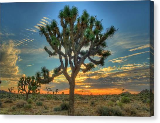 Joshua Tree At Sunrise Canvas Print
