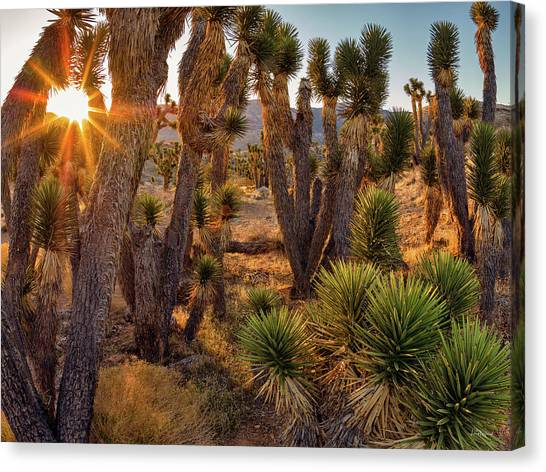 Joshua Trees Canvas Print by Leland D Howard
