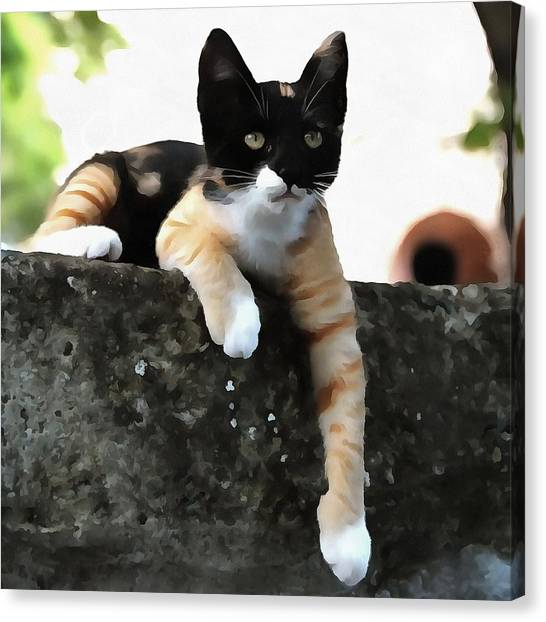 Just Chillin Tricolor Cat Canvas Print
