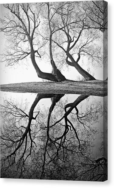 Oyama Canvas Print - Kaloya Pond And Willow Trees by Darrel Giesbrecht