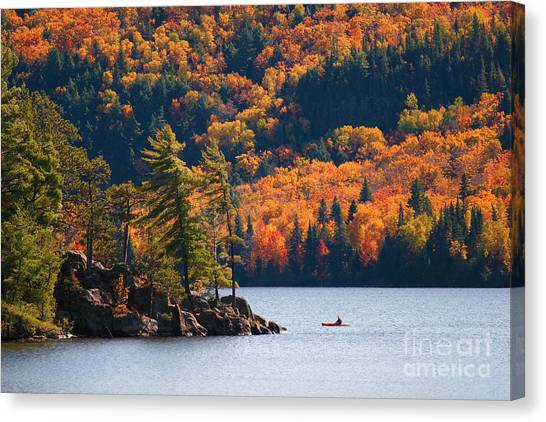 Canoe Canvas Print - Kayaking In Algonquin Provincial Park by Aivoges