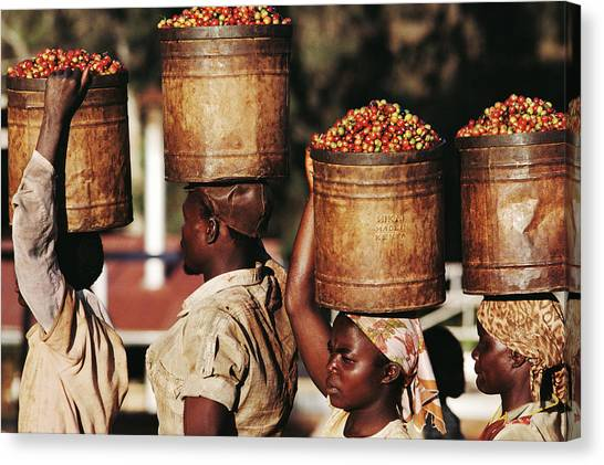 Kenya, Women Carrying Buckets Of Coffee Canvas Print