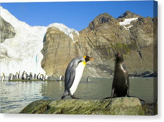 King Penguin And Female Antarctic Fur Canvas Print