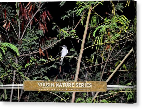 Kingbird In Casha - Virgin Nature Series Canvas Print