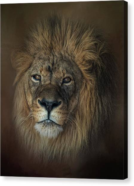 King's Gaze Canvas Print