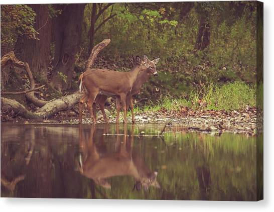 Canvas Print featuring the photograph Kissing Deer Reflection by Dan Sproul