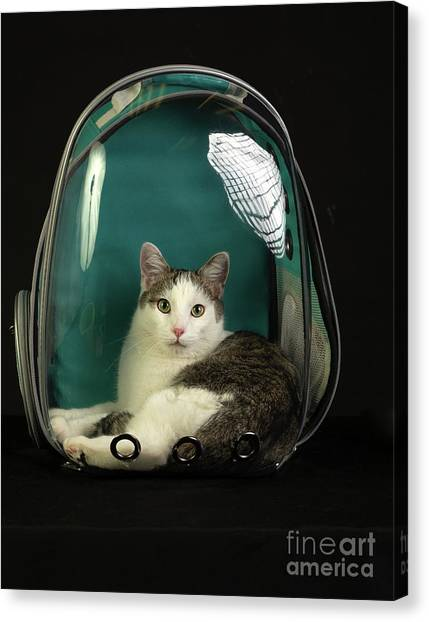 Kitty In A Bubble Canvas Print