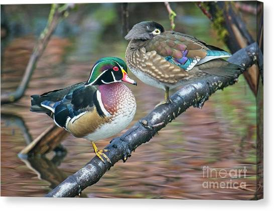 Kodachrome Ducks Canvas Print