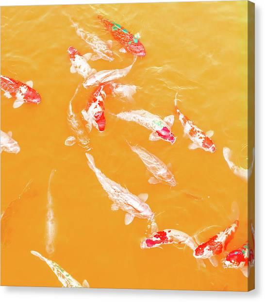 Koicarpscape 5 Canvas Print