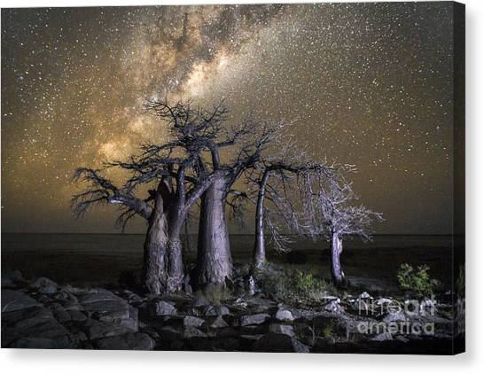 Formation Canvas Print - Kubu Island In Botswana by 2630ben