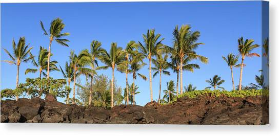 Canvas Print featuring the photograph Kukio Palms by Denise Bird