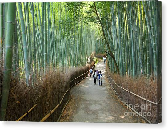 Japanese Gardens Canvas Print - Kyoto, Japan - Green Bamboo Grove In by Tupungato