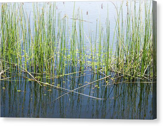 Lake Ilsanjo_533_18 Canvas Print