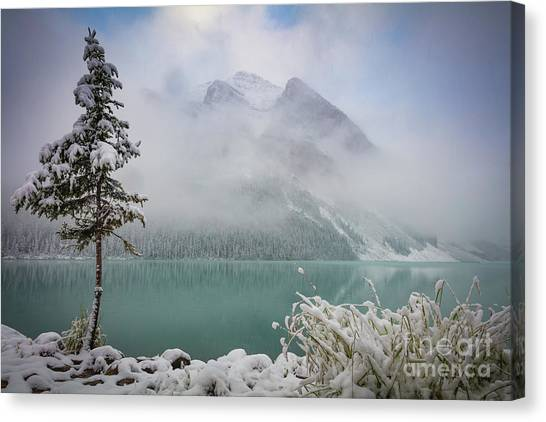 Foggy Forests Canvas Print - Lake Louise Lonesome Tree   by Inge Johnsson