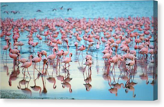 Lake Nakaru Flamingoes Canvas Print by Grant Faint